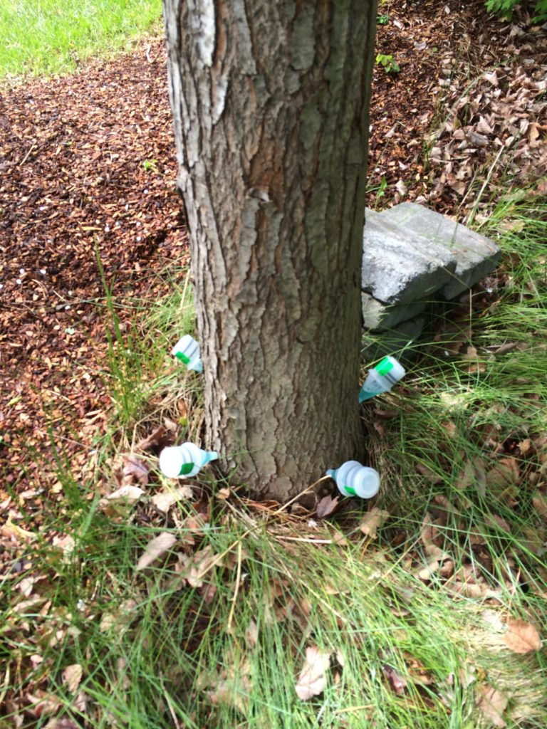 tree arborist landscaping