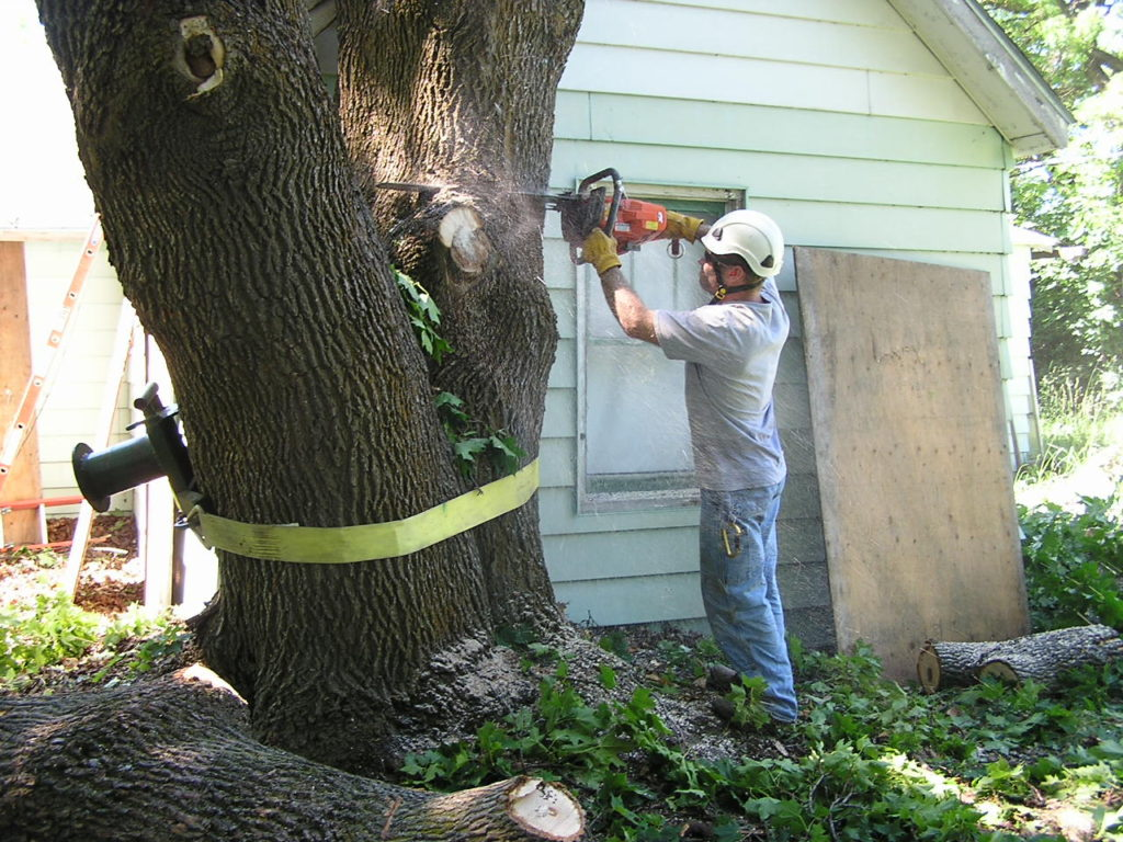 Arborist removing down dangerous tree
