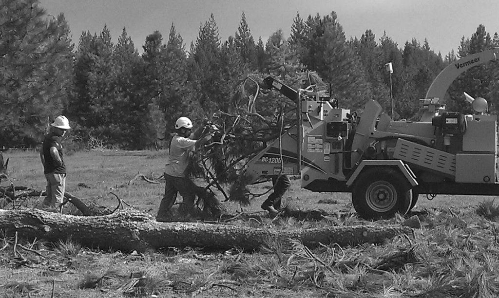 Professional arborist crew removing tree