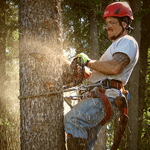 tree specialist cutting down dangerous tree