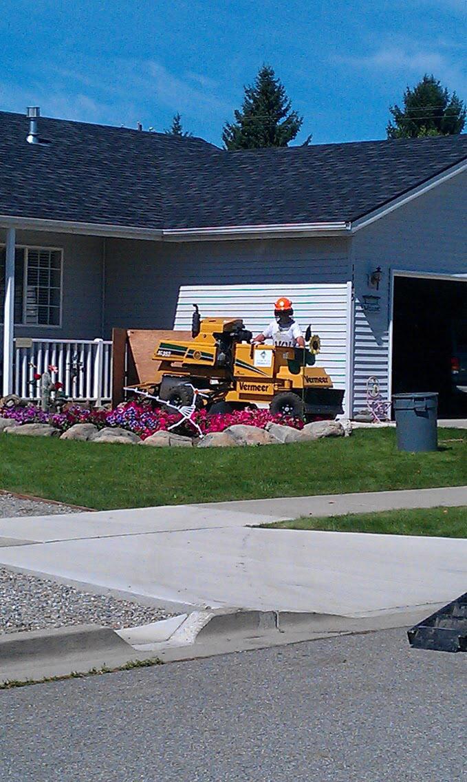 Arborist Professional with Arborist equipment