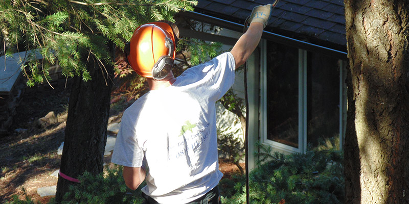 don taylor dangerous tree removal