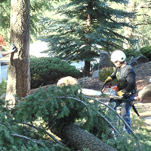 tree specialist cleaning up tree and branches from a storm