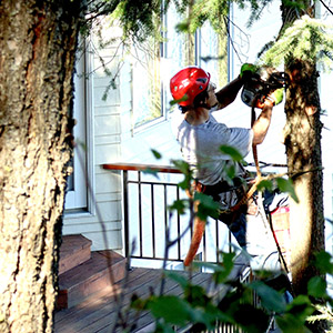Tree Specialist pruning tree near house